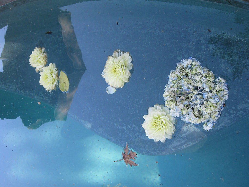 Unfortunately, some of the flowers wilted. Instead of throwing them away, we tossed them in the pool.