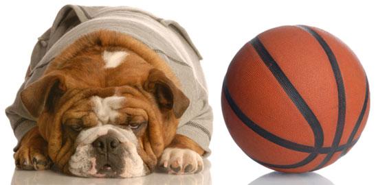 Basketball Toys For Dogs Make a Slam Dunk!