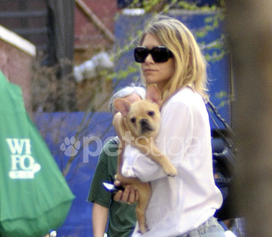 New Puppy Alert! Ashley Olsen's New Frenchie Friend