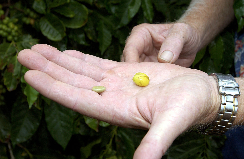 Coffee beans are extracted from coffee cherries in a stag