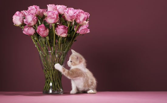 How to Dry Flowers With Kitty Litter