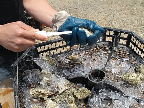 Burning Question: Can You Eat Oysters in Months Without an R?