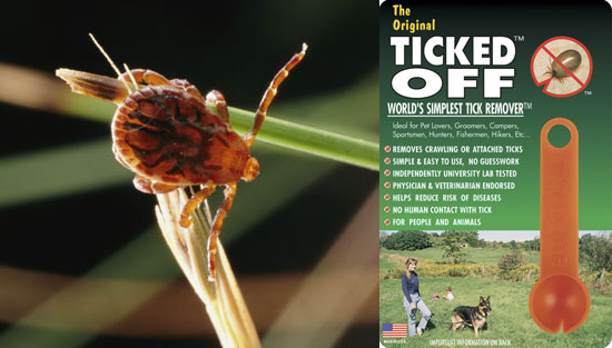 Tick Spoon For Pets Called Ticked Off