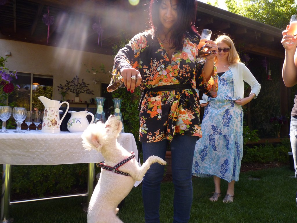 Although the party was all about the bride, Iggy the dog managed to steal the spotlight!