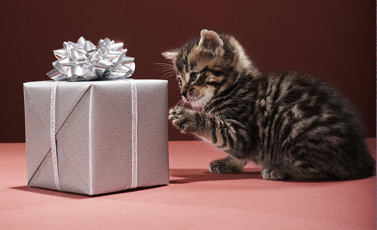 The Most Extravagant Gifts