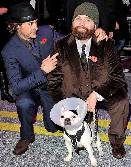 Robert Downey Jr and Zach Galifianakis at London Due Date Premiere