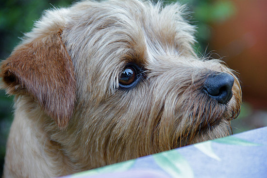 Pictures of Terriers