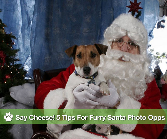 Pictures of Santa Claus Posing With Dogs