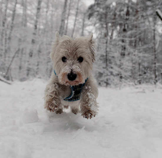 Pictures of a Dog in the Snow