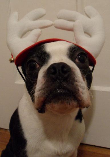 North the Dog Christmas