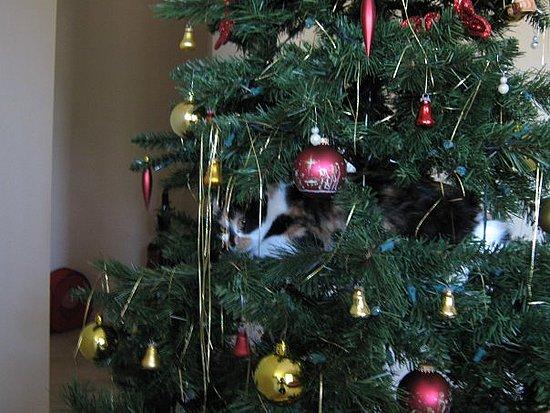 Kitties Love Christmas