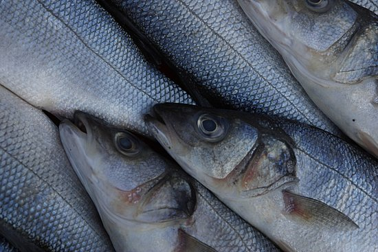 Sustainable Seafood Guidelines Often Allow For Middle Ground