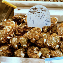 "Scientists Declare Oysters ""Functionally Extinct"""