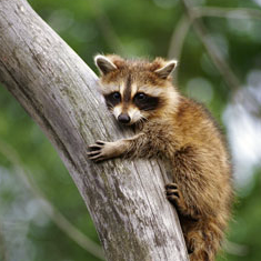 Which Backyard Baby Animal Is Cuter?