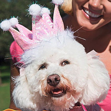 How to Celebrate a Pet's Birthday