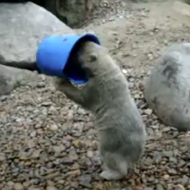 Baby Polar Bear With Bucket Hat