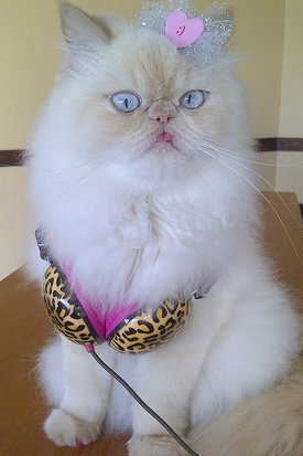 Pet Pic of the Day: Fashionable Feline