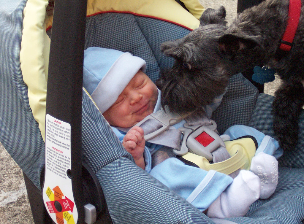 First Time Baby Meets the Family Pet