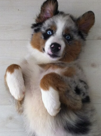 Pet Pic of the Day: Blue-Eyed Beauty