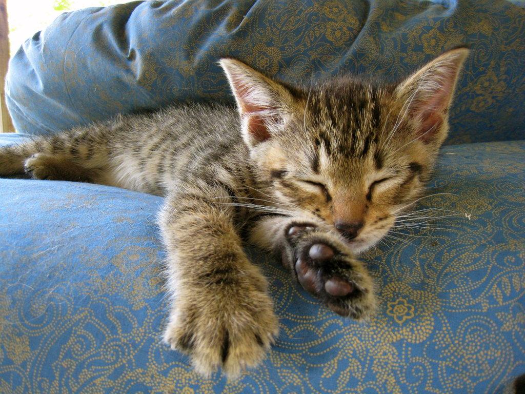 You're getting very sleepy . . . Source: Flickr user BruceTurner