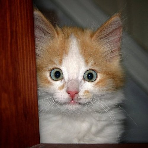 Yowza! I thought we had a cat burglar! Source: Flickr user Ernst Vikne