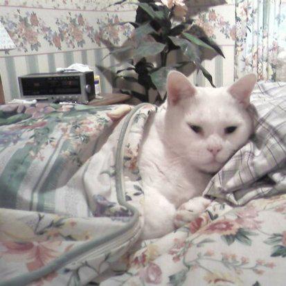 Kitty Kamouflage
