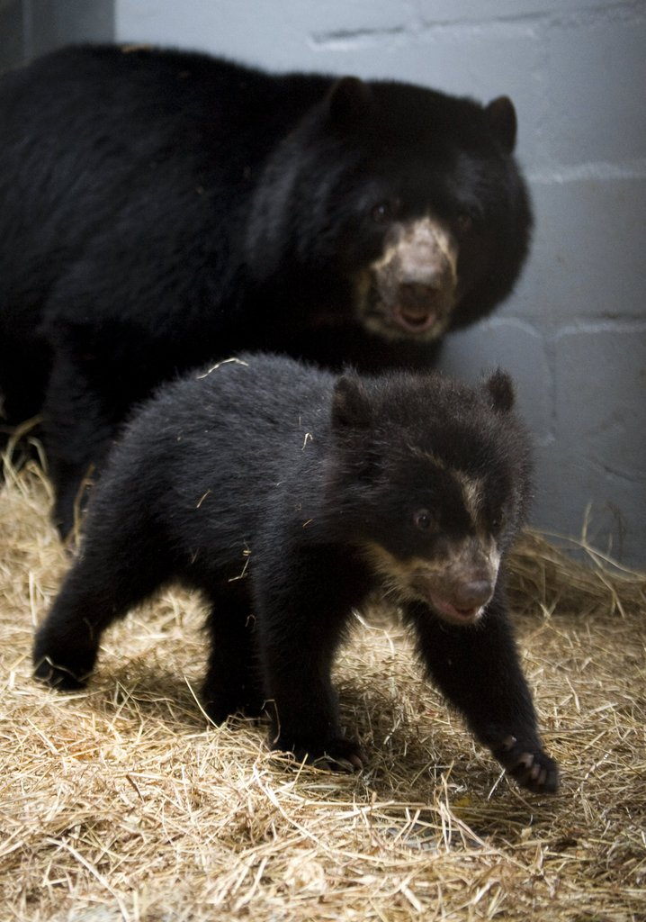 Mom keeps an eye on her little one, who walks with a purpose!