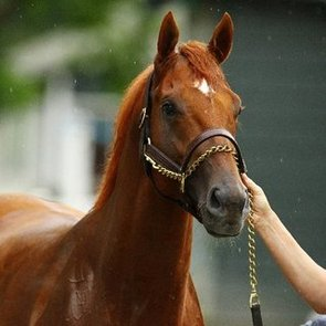I'll Have Another and 12 Other Horses Who Almost Won the Triple Crown