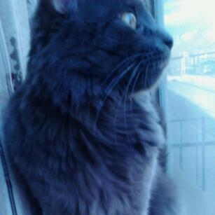 Focused Feline