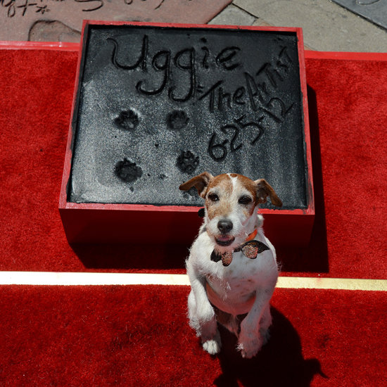 Uggie's Paw Print Ceremony Pictures