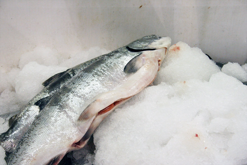 The Size and Weight of the Salmon