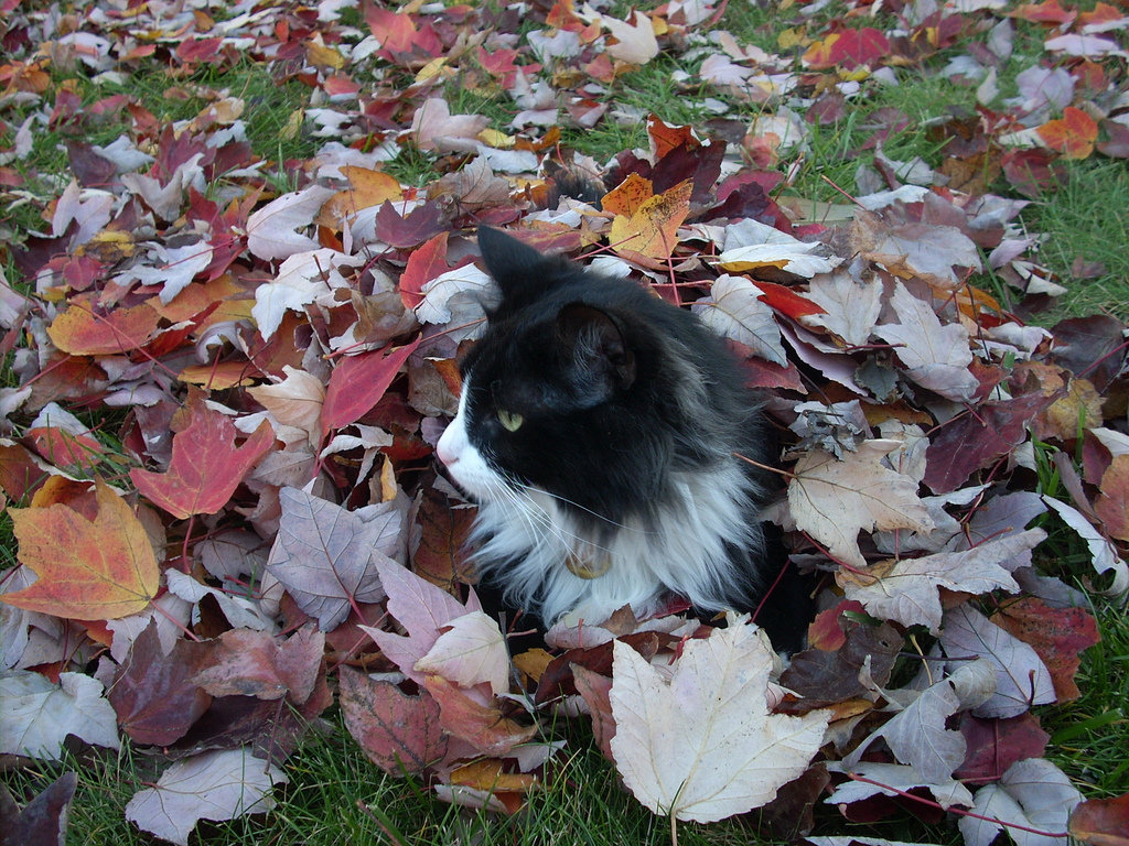 Finding just enough leaves to make a proper bed! Source: Flickr user mark0978