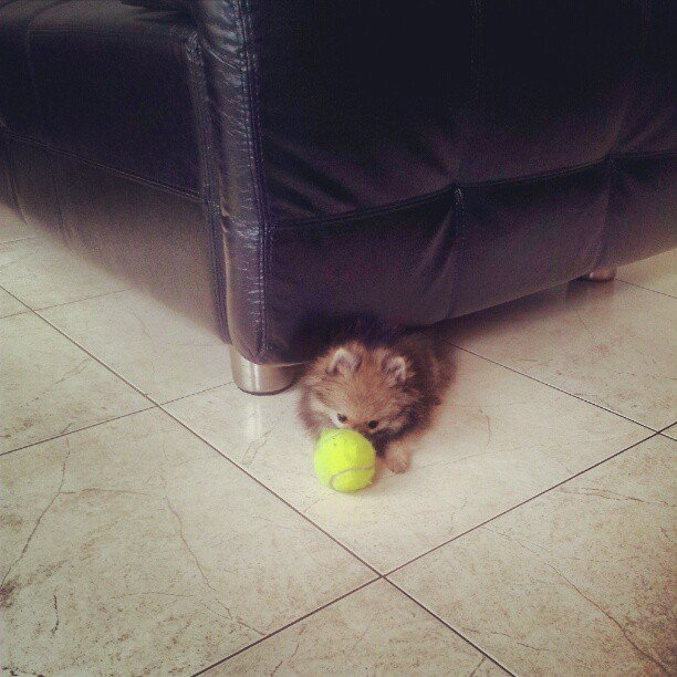 I Can Fit Under the Couch . . . Why Can't This Ball?