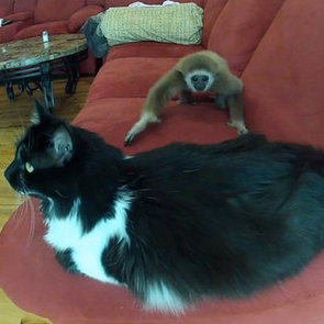 Baby White-Handed Gibbon Playing With Cat | Video