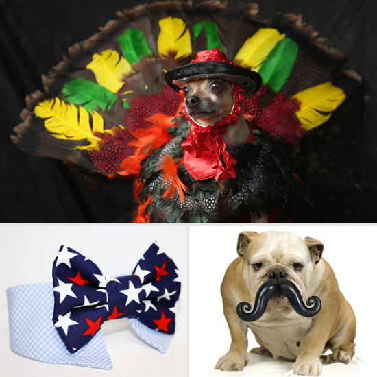 Stock Your Pet's 'Stache With PetSugar's November Must Haves