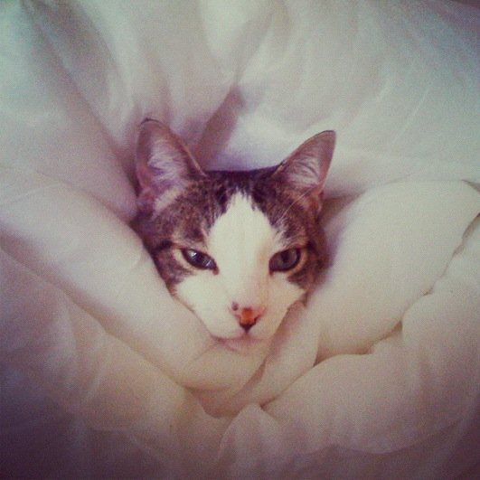 Art Director of Web & UX Sarah Jura's cat, Jack, couldn't have been more cozy, engulfed in the comforter.