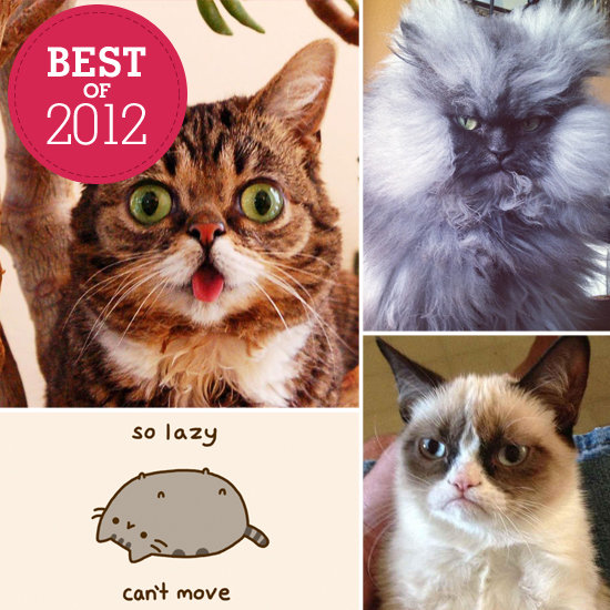 The Best Internet Cat Personalities of 2012