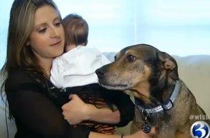 Dog Helps Save Nine-Week-Old Baby (VIDEO)