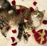 Valentine's Day Gift Ideas For Pets