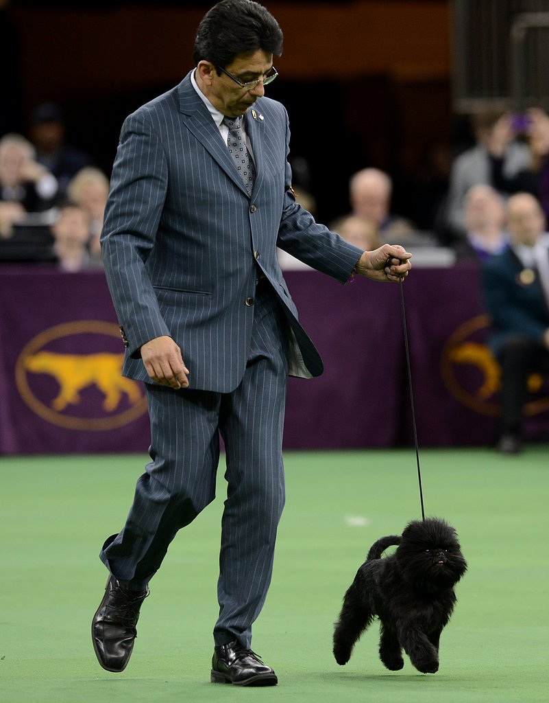 Handler Ernesto Lara walked his winning Affenpinscher during the show.