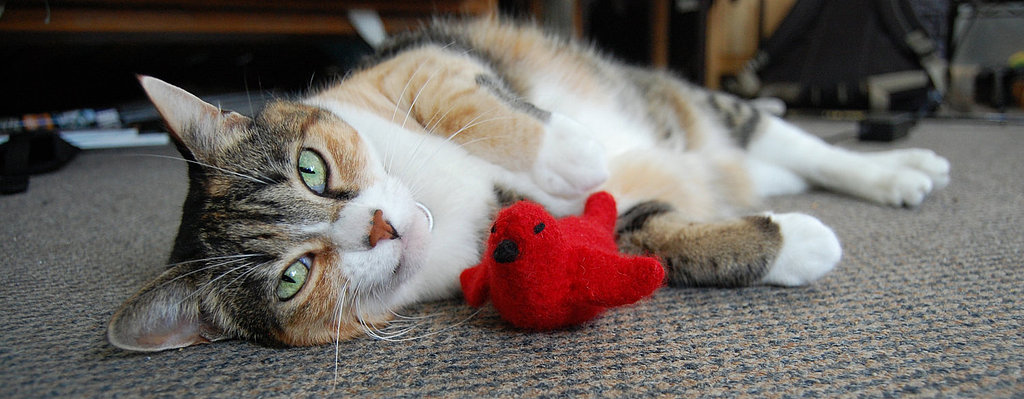 Wool Felted Cat Toy