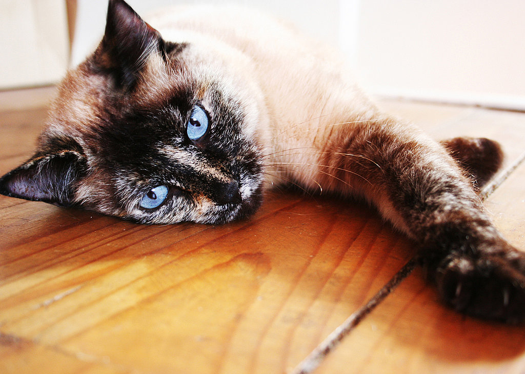 What Can I Do When My Cat Is Sneezing?