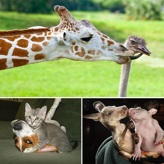 Want to See True Love? Then Look at These Interspecies Friendships!