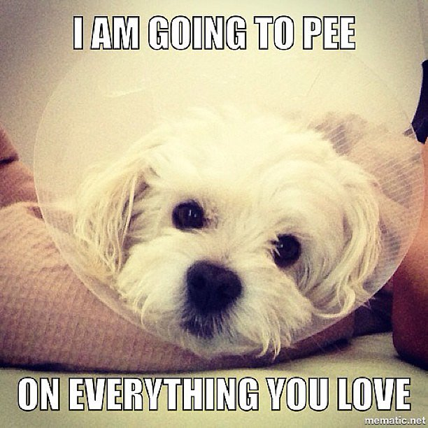 Need a Laugh? These Animal Memes Should Do the Trick!