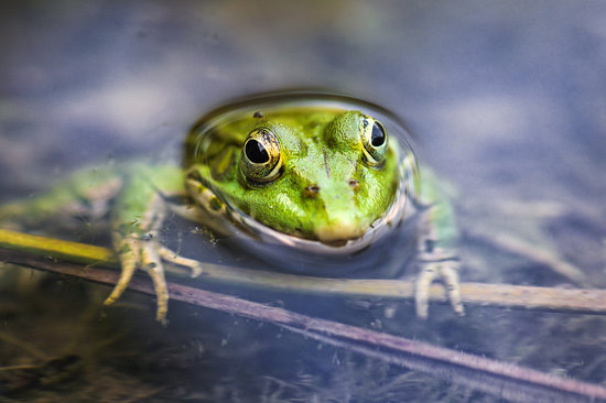 Hey, Hoppers! April Is National Frog Month