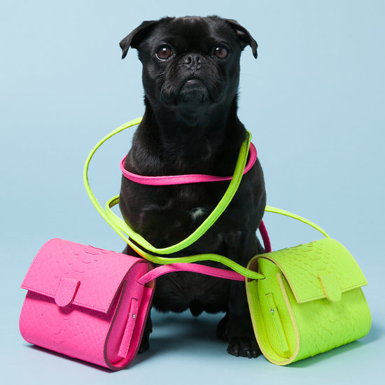 Avenue 32 Fashion Unleashed Dogs and Accessories | Pictures