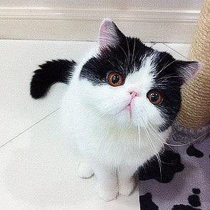 Cute Smush-Faced Cats