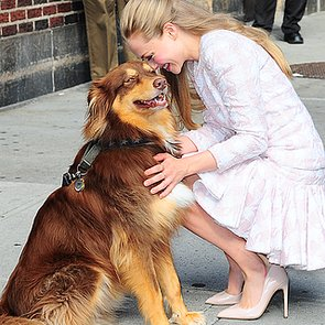 Amanda Seyfried Brings Dog to Letterman | Video