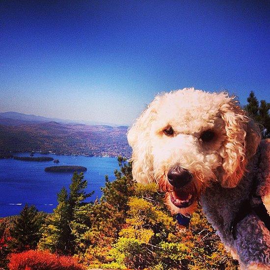 Instagram Challenge: Fall Pets