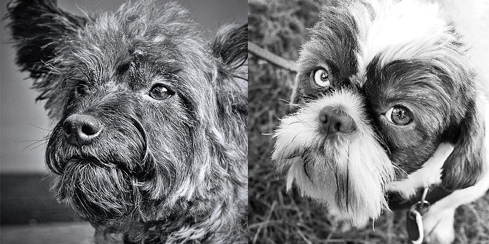 Show Homage to Senior Pets With Crotchety Canines